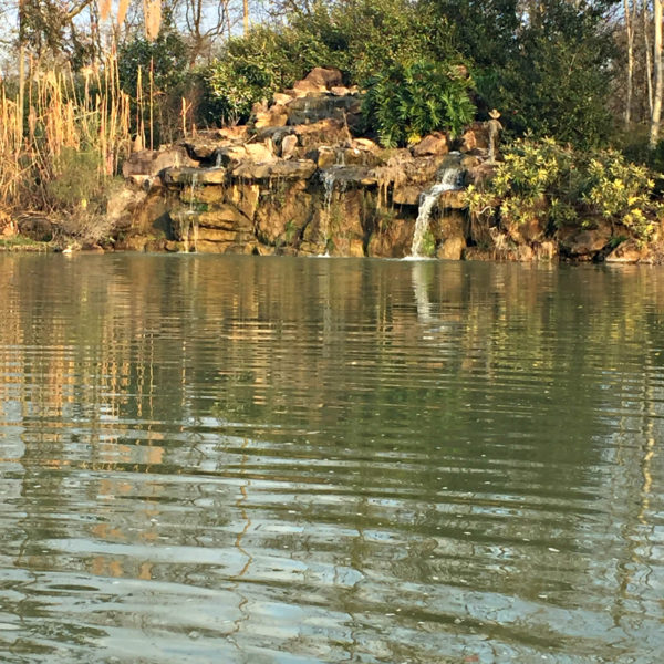 Feeding Fish at Tyrrell Park